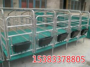 猪场设备 限位栏 定位栏带地板 漏粪板定位栏
